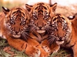 Proteger le regne animal